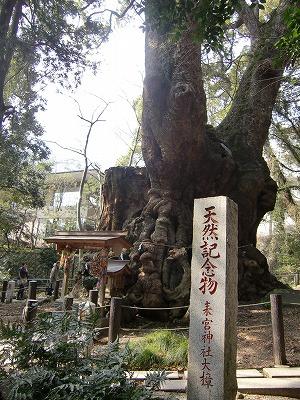 来宮神社 パワースポット 楠の木「大楠」 画像