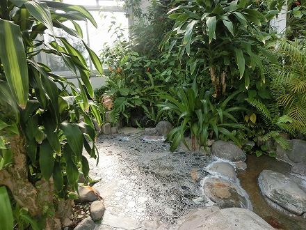 熱川温泉「ホテルカターラリゾート&スパ」のジャングルスパでジャングルの動物を探すのも楽しみ