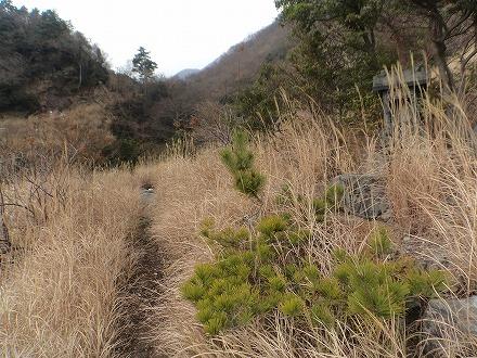 鍋山の湯は草に隠れています