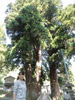 栢野大杉からは聖なるパワーをいただけました
